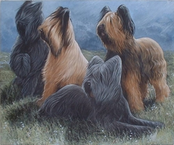"Briard ""Group of Four"""