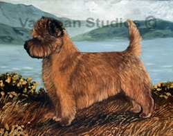 "Cairn Terrier ""Red Highland Cairn"""