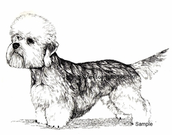"Dandie Dinmont Terrier ""Showing Off"""