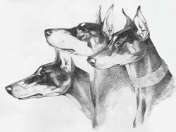 "Doberman Pinscher ""The Sentinels"""