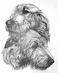 Irish Wolfhound Adult Pair Original Pen and Ink Drawing