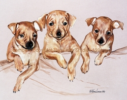 "Miniature Pinscher ""Puppy Trio"""