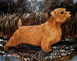 "Norfolk Terrier ""Bird Watching"""