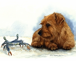"Norfolk Terrier ""Blue Crab Encounter"""