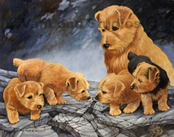 "Norfolk Terrier  ""First Hunting Trip"""