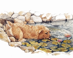"Norfolk Terrier ""Lily Pond"""