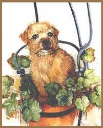 "Norfolk Terrier ""Puppy in a Pot"" Limited Edition Print"