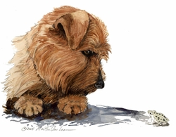 "Norfolk Terrier ""The Frog"""
