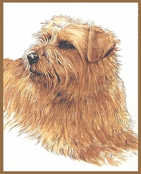"NorfolkTerrier ""Pretty Girl"" Limited Edition Print"