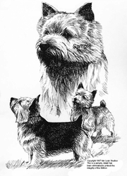 "Norwich Terrier ""Group"""