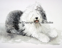 "Old English Sheepdog ""Lying Down"""