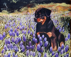 "Rottweiler ""In The Lupins"""
