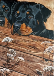 "Rottweiler ""On The Fence"""