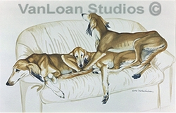 """Saluki """"Salukis On The Couch"""""""