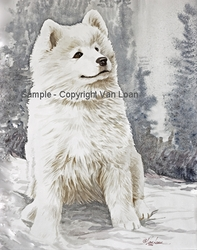 "Samoyed ""Puppy In The Snow"""