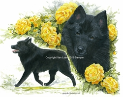 Schipperke Club of America National Specialty 2015