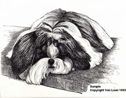 "Shih Tzu ""Waiting On The Bench"""