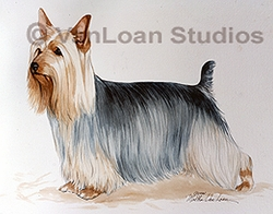 "Silky Terrier ""Standing Pretty"""