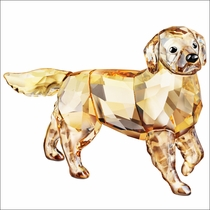 (SOLD OUT) Golden Retriever Mother