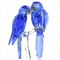 (SOLD OUT) SCS Hyacinth Macaws 2014