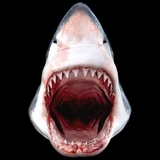 Big Mouth Shark Animal 3D T-shirt