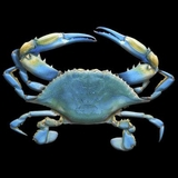 Blue Crab Animal 3D T-shirt