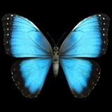 Morpho Butterfly Animal 3D T-shirt