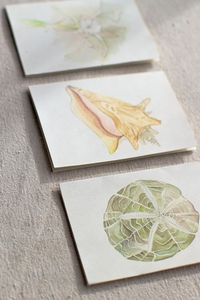 Hand Painted Note Cards by India Hicks