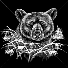 Wholesale Bulk T Shirts Funny Fashion - Wholesale - Funny T Shirts - 12603-11x9-winter-bear