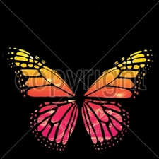 Wholesale Bulk T Shirts Funny Fashion - Wholesale - Funny T Shirts - Butterfly Bulk - Suppliers 16157-9x9-trust-me-butterfly