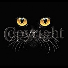 Wholesale Cat Eyes T Shirts - Cat 5342-P14