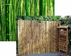 Bamboo as a sustainable material