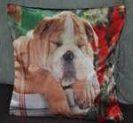 Bull Dog Photo Cushion Covers (size 35cm by 35cm)