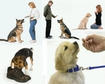 Dog Clicker Training Tips & Accessories
