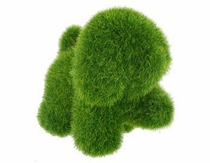 'Dog' Grass Pet