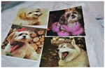 Dog Motif Coasters (value set of 4)