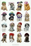 'Dogs with Hats' Poster by Keith Kimberlin (36 by 24 inches)
