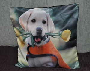 Golden Retriever Dog Photo Cushion Covers (size 35cm by 35cm)