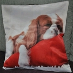 King Charles Spaniel Dog Photo Cushion Covers (size 35cm by 35cm)