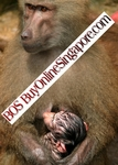 Royalty Free Photograph of Monkey Mother with Infant Monkey