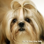 Shih Tzu Dog theme Wall Decal