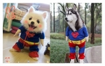 Superman Dog Novelty Costume