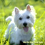 Westie Dog theme Wall Decal