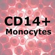 ImmunoPure<sup>™</sup> CD14+ Monocytes