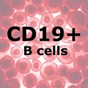 ImmunoPure<sup>™</sup> HD B Cells CD19