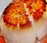 IQF SCALLOPS 2/5LB 40/60 CT PER POUND