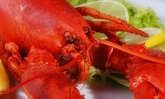 Six 1.25-lb. Live Maine Lobsters