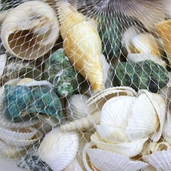 Assorted Seashells 2 lb.