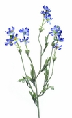 Baby Cosmos 27.5 inch - Blue - Pkg of 12
