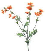 Baby Cosmos 27.5 inch - Orange - Pkg of 12